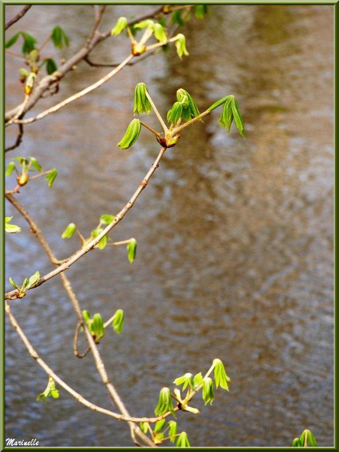 Marronniers aux feuilles printanières et reflets en bord de La Leyre, Sentier du Littoral au lieu-dit Lamothe, Le Teich, Bassin d'Arcachon (33)