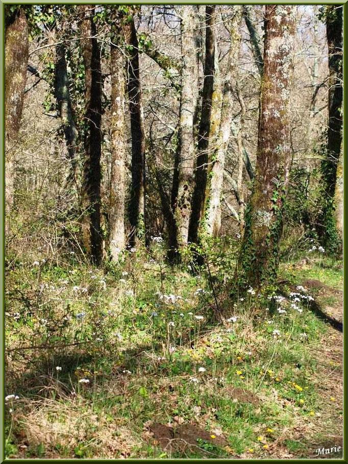 La forêt servant d'écrin à la Fontaine Saint Jean à Lamothe, Commune du Teich (Bassin d'Arcachon)