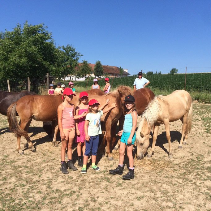 Besuch der Fohlen und Jungpferde