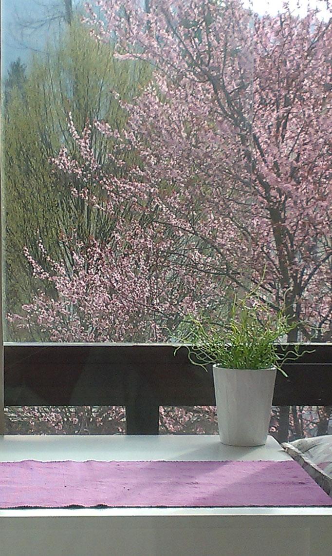 Bad Ischl Appartement Miramonte - Ausblick im Frühling - Ferienwohnung