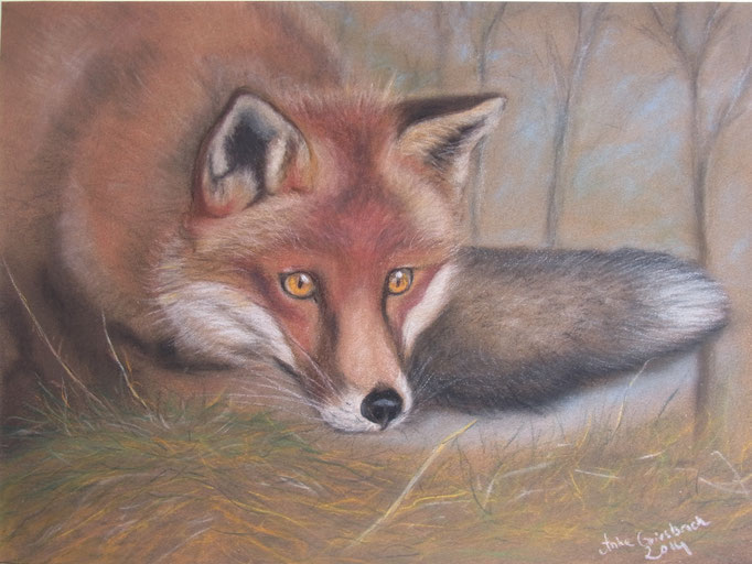 Fuchs auf der Lauer, 2014, Pastell, 24*30 cm