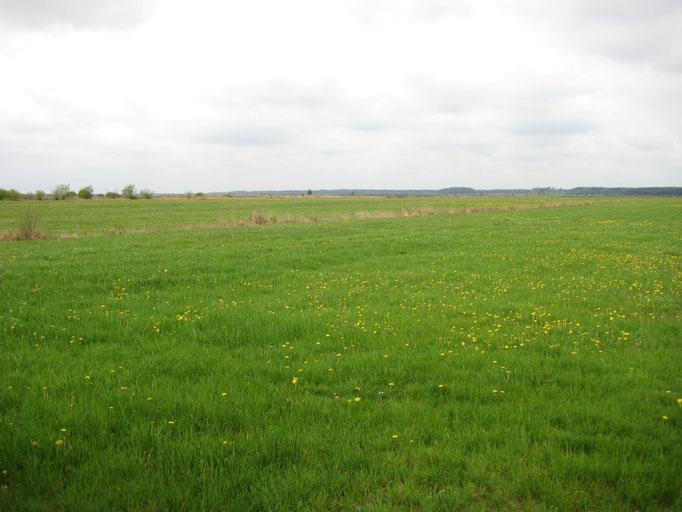 Am Rand des Moores befinden sich feuchte Moorwiesen