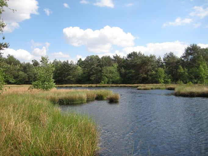 Moortümpel sind der Lebensraum für viele Libellen und Moorfrösche