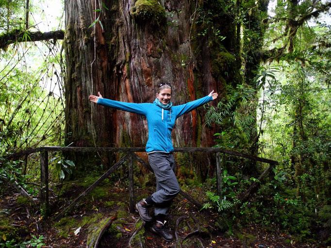 Ein Highlight des Parks sind – neben spektakulären Wanderwegen durch still being logged illegally