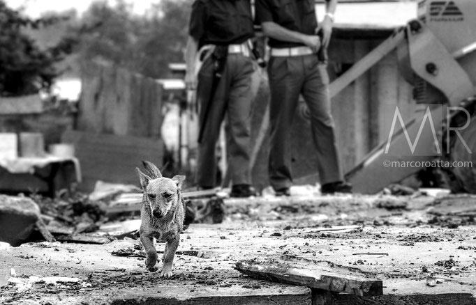 Un cane cerca il padrone - Campo nomadi - Torino