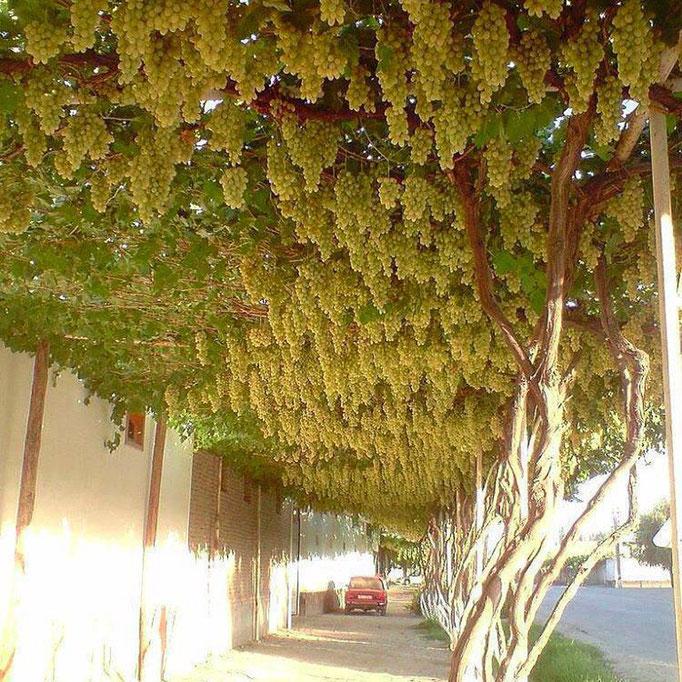 Carretera de uva (Armenia)