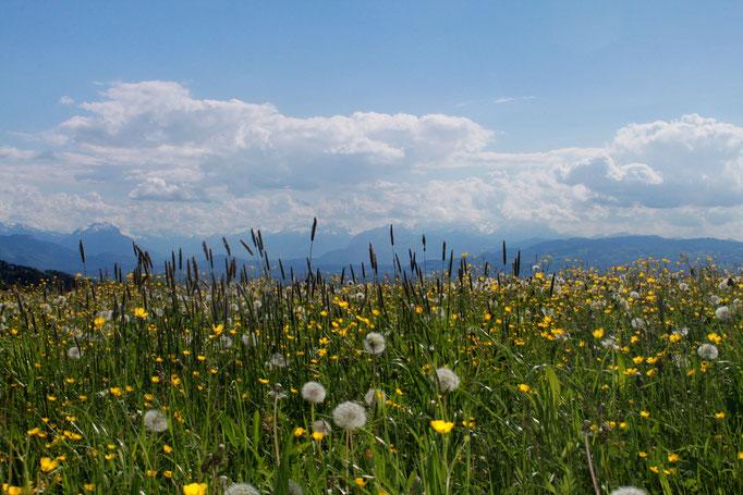 Biodiversität über dem Bodensee