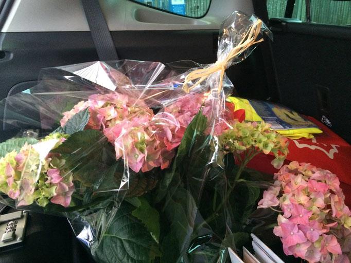 Autos (Tatsache!) voller Blumen