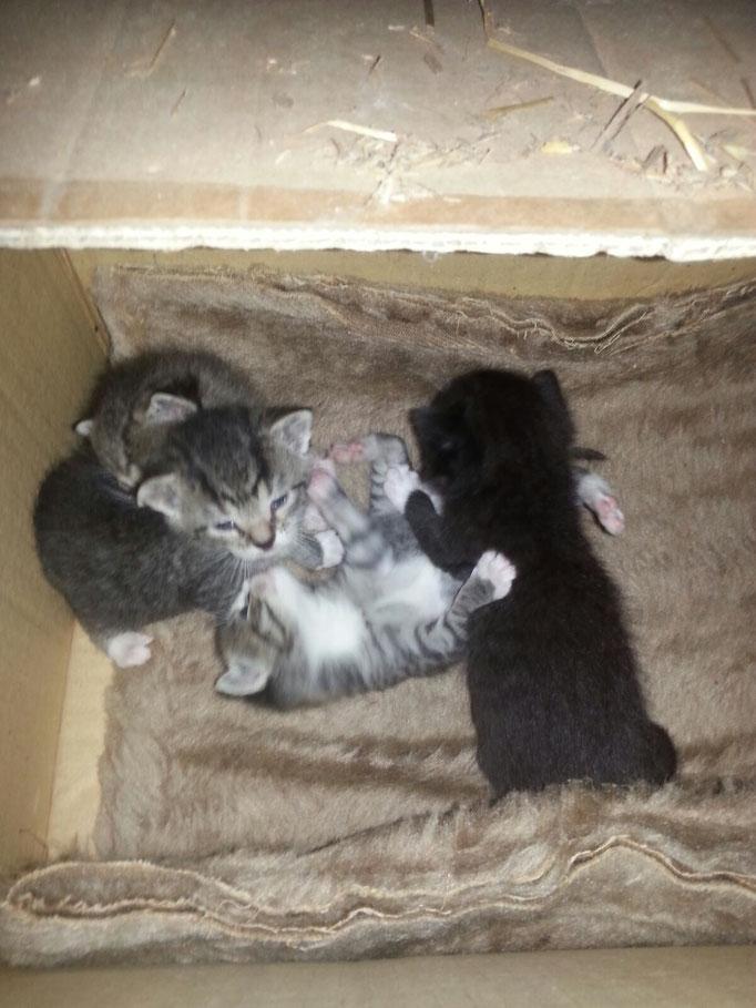 Die Kitten im Juni