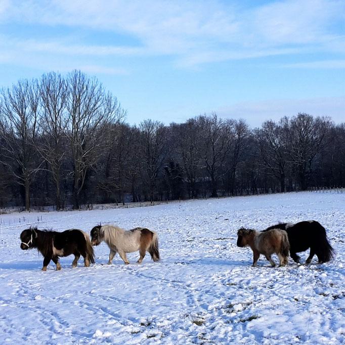 ....ein schöner Wintertag