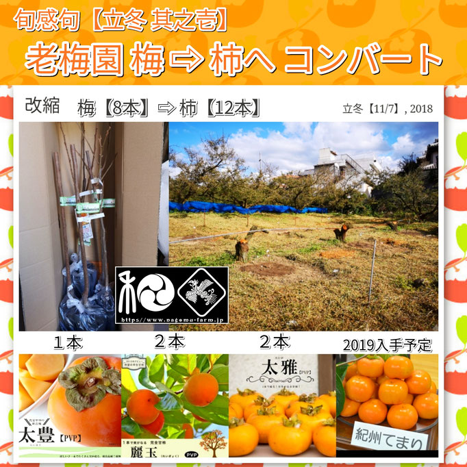 旬感句 【立冬 其之壱】 『老梅園 梅 ⇨ 柿へ コンバート』