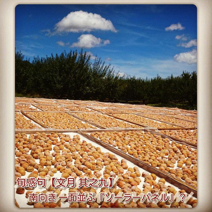 旬感句【大暑】 南向き 一面並ぶ 『ソーラーパネル』?