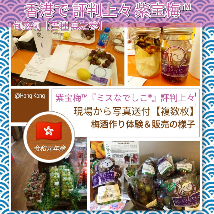 旬感句 【芒種 其之参】 『香港で 評判上々 紫宝梅™』