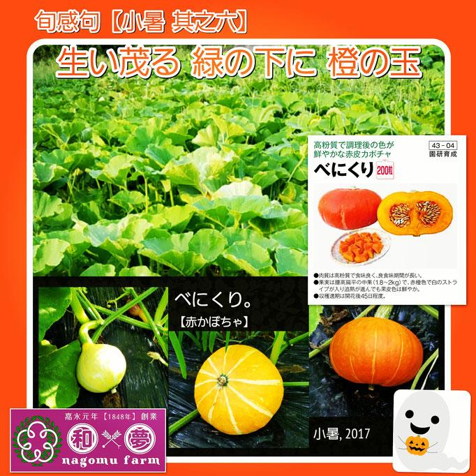 旬感句 【小暑 其之六】 『生い茂る 緑の下に 橙の玉』
