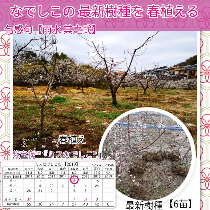 旬感句 【雨水 其之弐】 『なでしこの 最新樹種を 春植える』