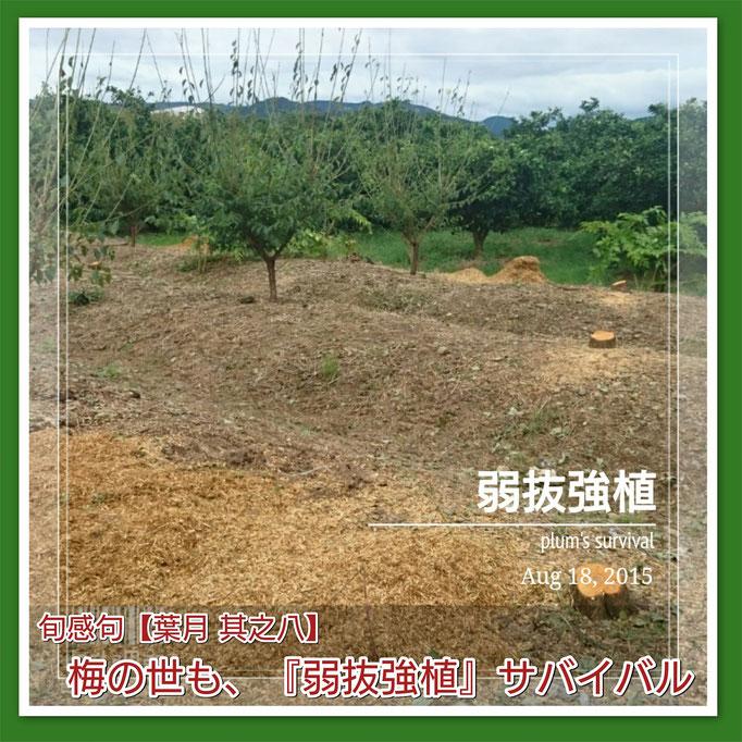 旬感句【立秋】 梅の世も、『弱抜強植』 サバイバル