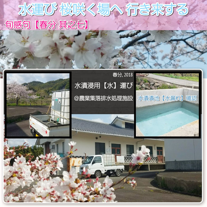 旬感句 【春分 其之七】 『水運び 桜咲く場へ 行き来する』