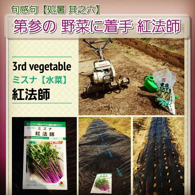 旬感句【処暑 其之六】 『第参の 野菜に着手 紅法師』