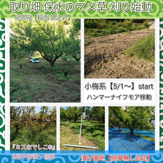 旬感句 【穀雨 其之八】 『取り畑 保水のマメ草 刈り始動』
