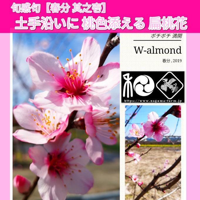 旬感句 【春分 其之壱】 『土手沿いに 桃色添える 扁桃花』