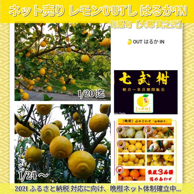 旬感句 【大寒 其之弐】 『ネット売り レモンOUTし はるかIN』