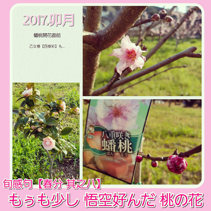 旬感句【春分 其之八】 『もぅも少し 悟空好んだ 桃の花』