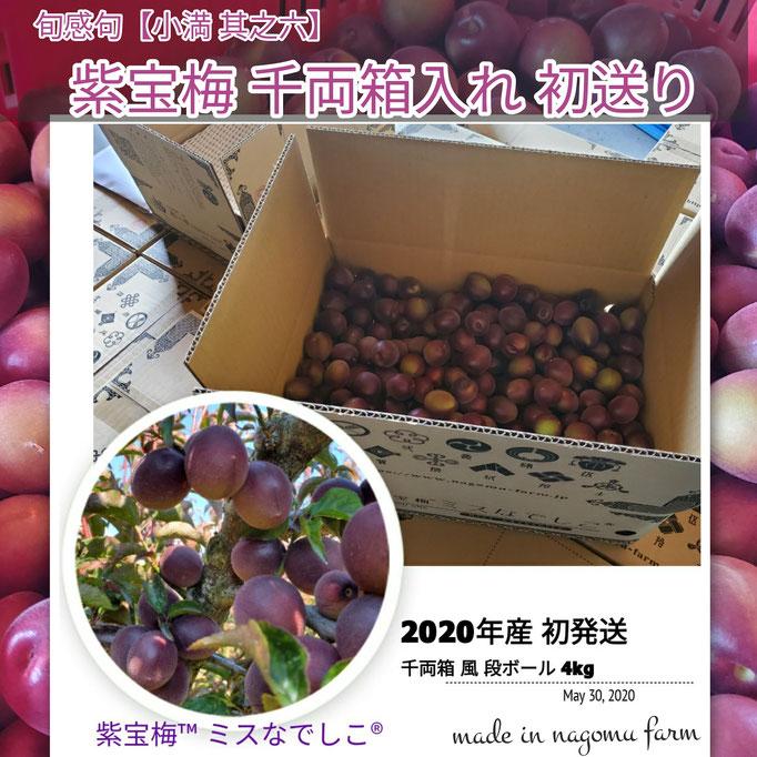 旬感句 【小満 其之六】 『紫宝梅 千両箱入れ 初送り』
