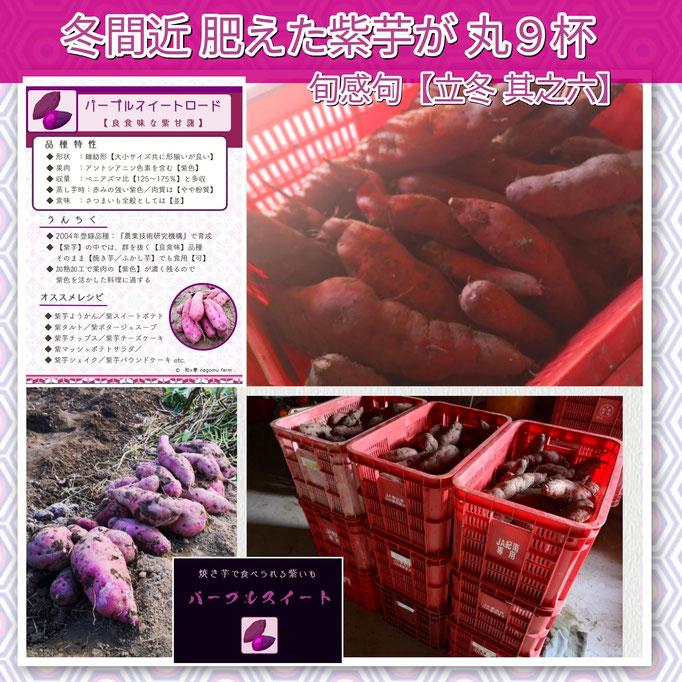 旬感句 【立冬 其之六】 『冬間近 肥えた紫芋が 丸9杯』