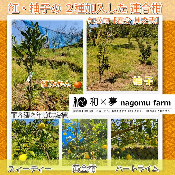 旬感句 【春分 其之弐】 『紅・柚子の 2種加入した 連合柑』