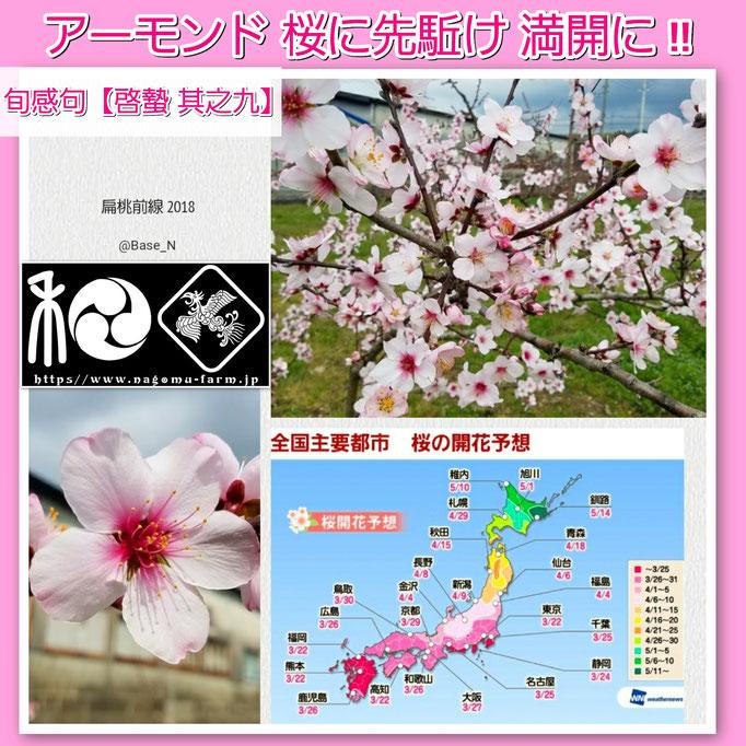 旬感句 【啓蟄 其之九】 『アーモンド 桜に先駈け 満開に!!』