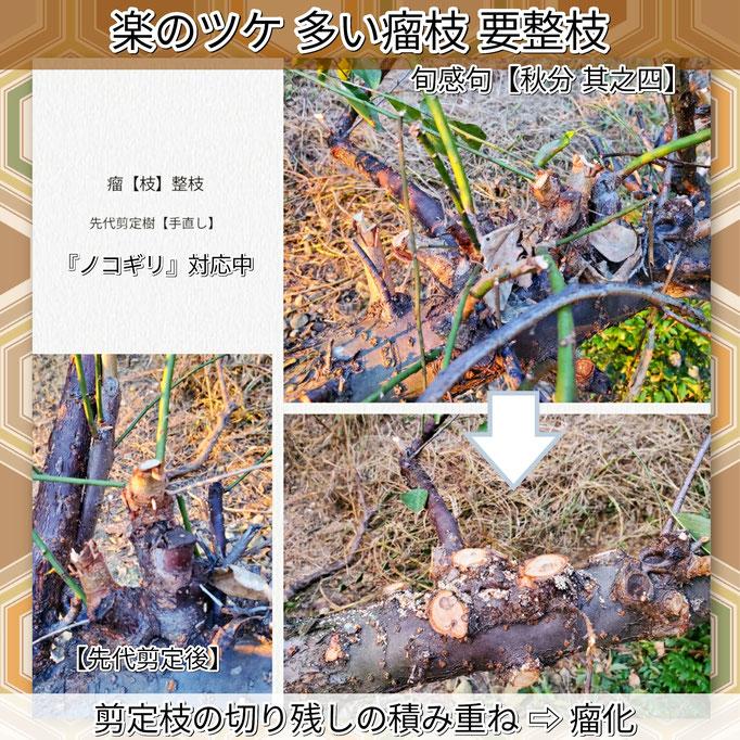 旬感句 【秋分 其之四】 『楽のツケ 多い瘤枝 要整枝』