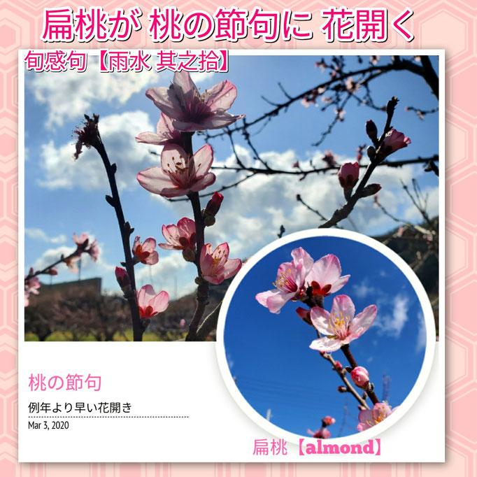 旬感句 【雨水 其之拾】 『扁桃が 桃の節句に 花開く』