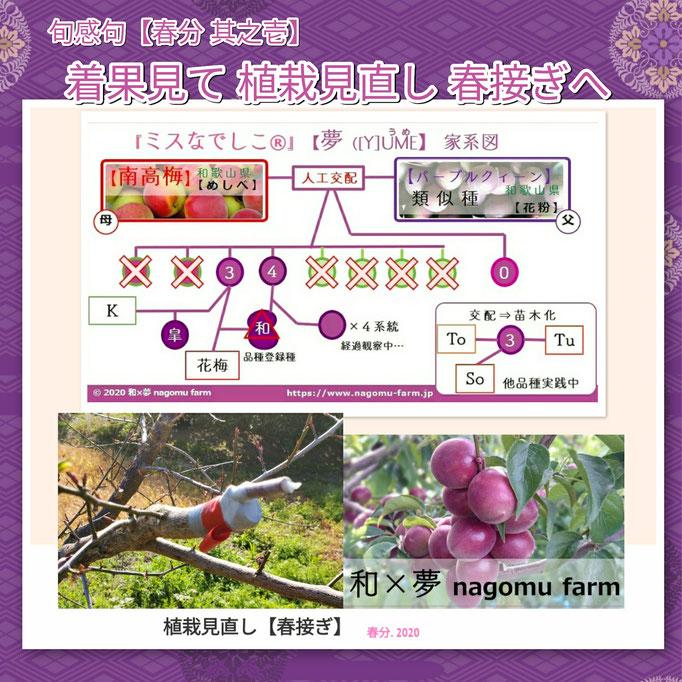旬感句 【春分 其之壱】 『着果見て 植栽見直し 春接ぎへ』