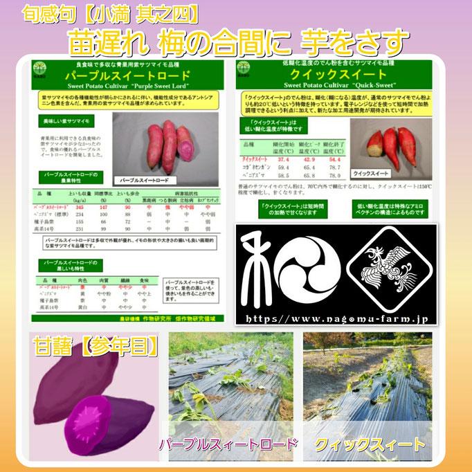旬感句 【小満 其之四】 『苗遅れ 梅の合間に 芋をさす』