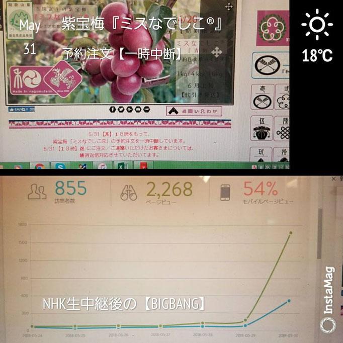 NHK生中継の反響【ビックバン】 紫宝梅 和×夢 nagomu farm
