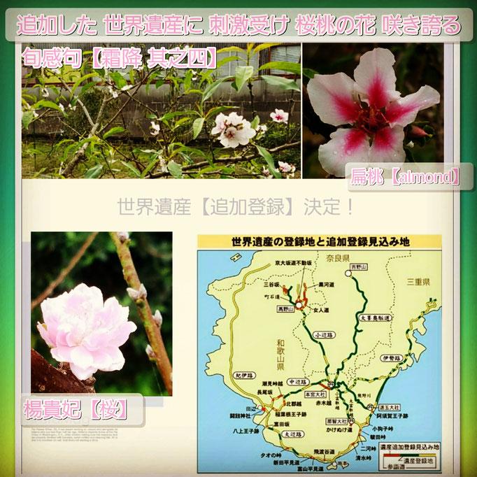 旬感句【霜降 其之四】 『追加した 世界遺産の 刺激受け 桜桃の花 咲き誇る』