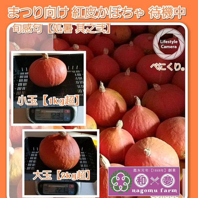 旬感句【処暑 其之弐】 『まつり向け 紅皮かぼちゃ 保管中』