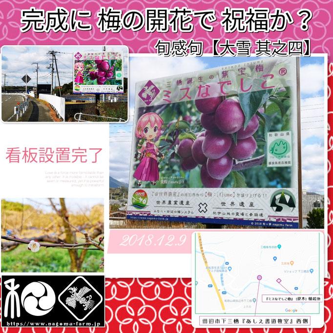 旬感句 【大雪】 『完成に 梅の開花で 祝福か?』