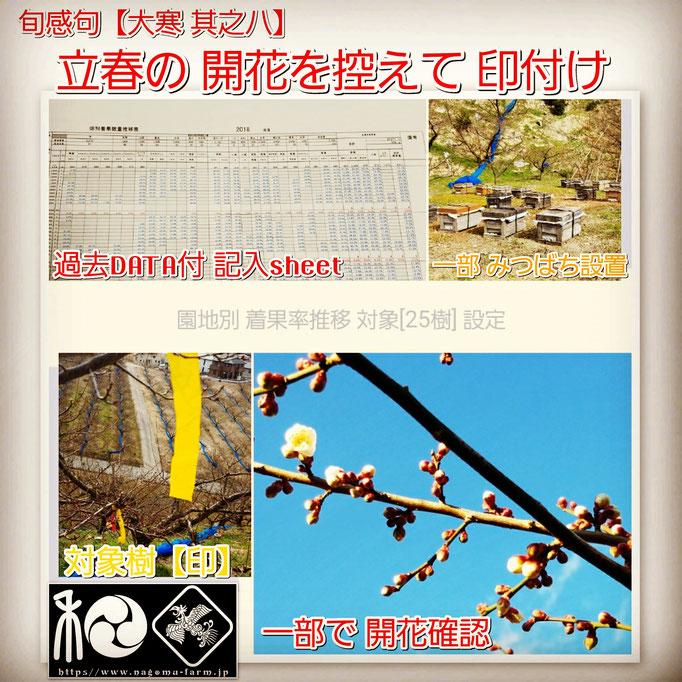 旬感句 【大寒 其之八】 『立春の 開花を控えて 印付け』