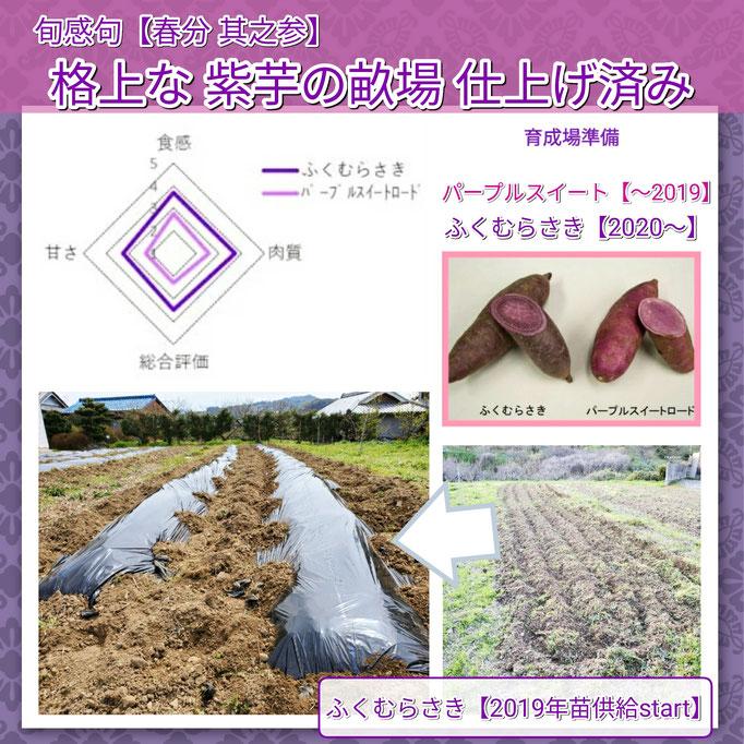 旬感句 【春分 其之参】 『格上な 紫芋の畝場 仕上げ済み』