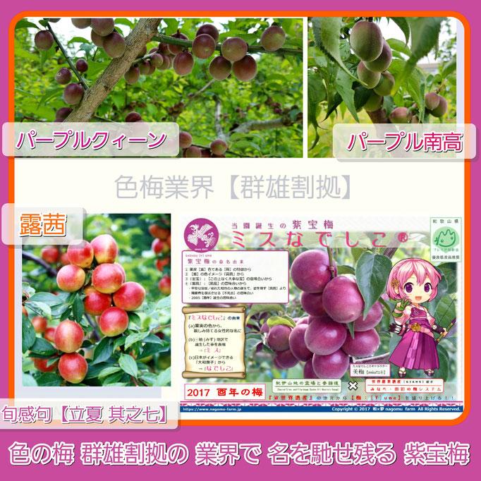 旬感句 【立夏 其之七】 『色の梅 群雄割拠の 業界で 名を馳せ残る 紫宝梅』