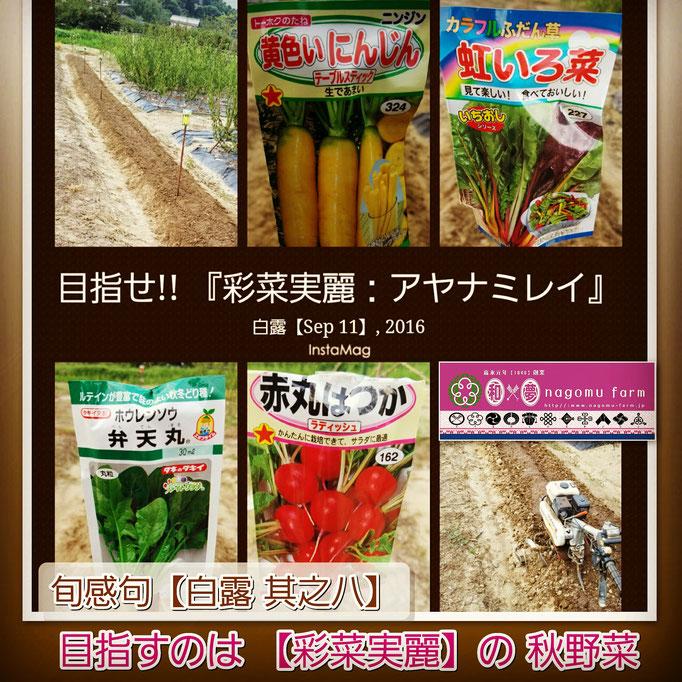 旬感句【白露 其之八】 『目指すのは 【彩菜実麗】の 秋野菜』