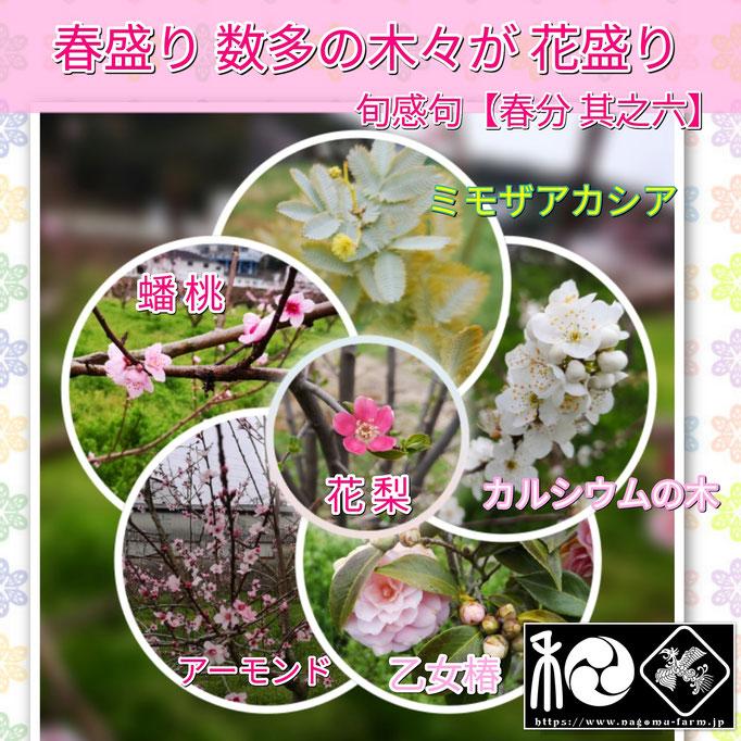 旬感句 【春分 其之六】 『春盛り 数多の木々が 花盛り』