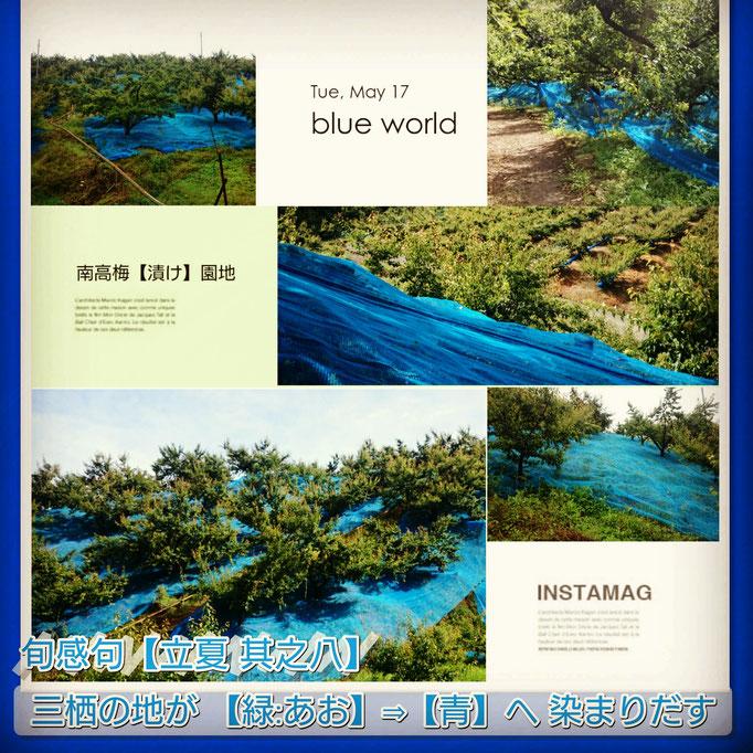 旬感句【立夏 其之八】 『三栖の地が 【緑:あお】⇒【青】へ 染まりだす』