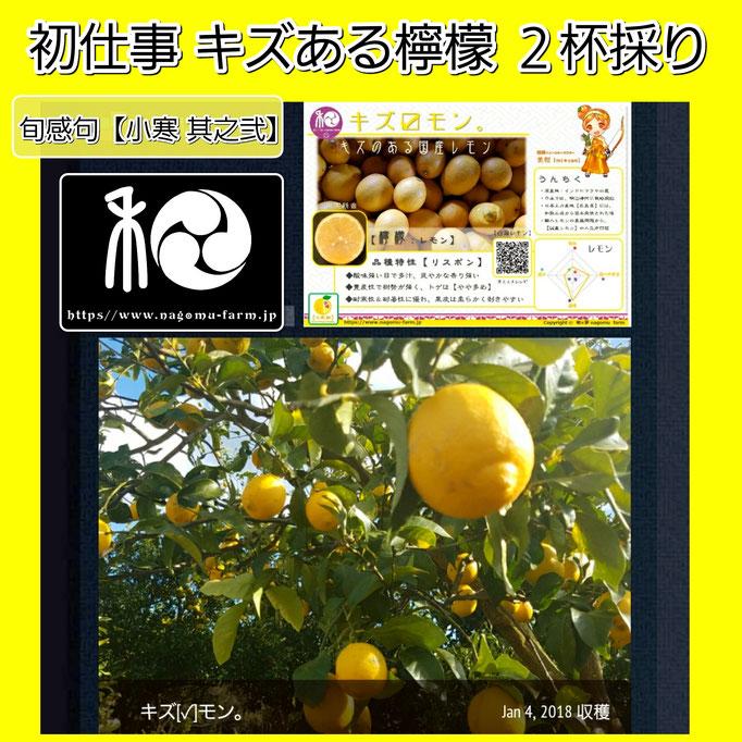 旬感句 【小寒 其之弐】 『初仕事 キズある檸檬 2杯採り』