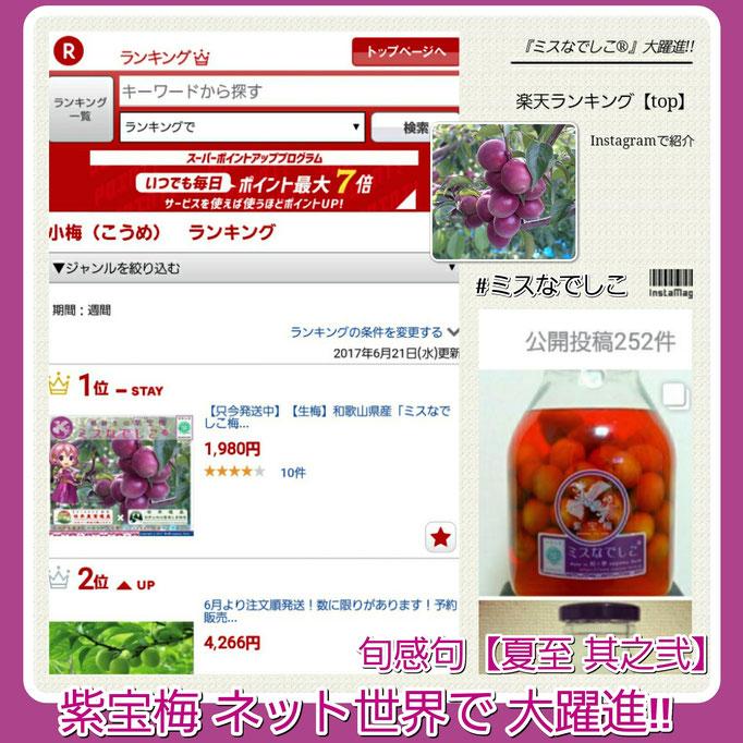 旬感句 【夏至 其之弐】 『紫宝梅 ネット世界で 大躍進!!』