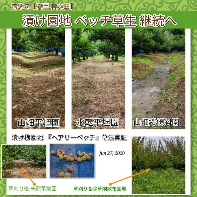 旬感句 【夏至 其之四】 『漬け園地 ベッチ草生 継続へ』