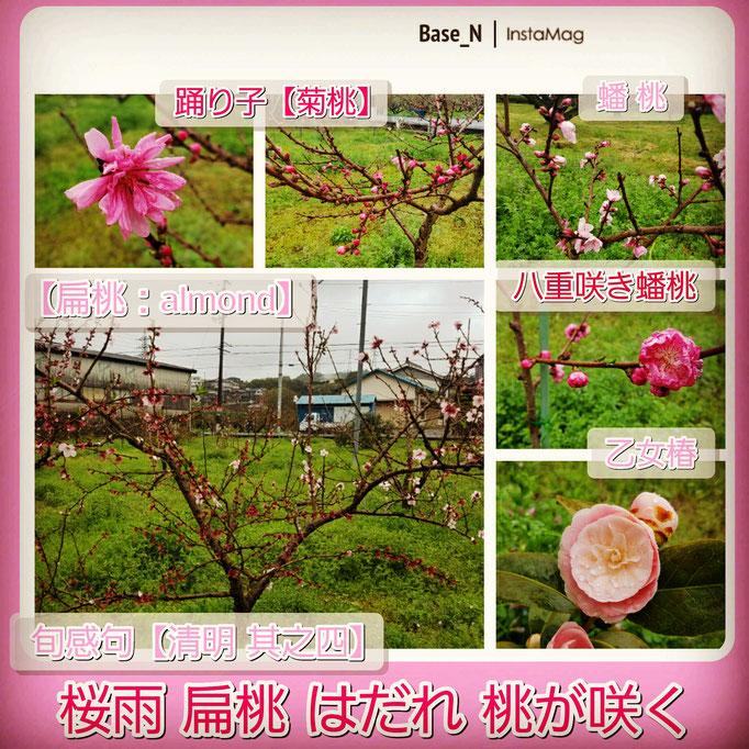 旬感句【清明 其之四】 『桜雨 扁平 はだれ 桃が咲く』