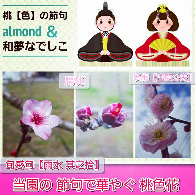 旬感句【雨水 其之拾】 『当園の 節句で華やぐ 桃色花』