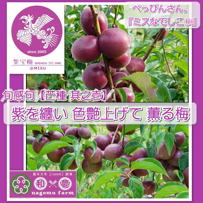 旬感句【芒種 其之壱】 『紫を纏い 色艶上げて 薫る梅』